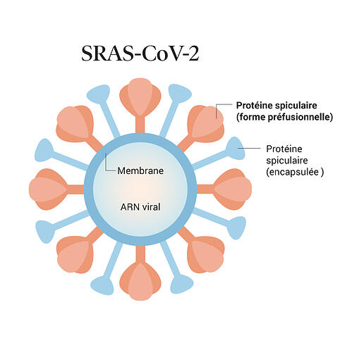 covid-19_vaccination_02-sarscov2_FR